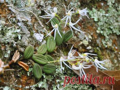 Виды орхидей - фото и названия фаленопсиса, дендробиума, луидизии, цимбидиума, мильтонии, камбрии, дракула, каттлеи, ванды, видео