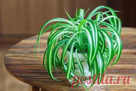 Какие комнатные растения нужны в доме, где курят - ЖЕНСКИЙ МИР - медиаплатформа МирТесен