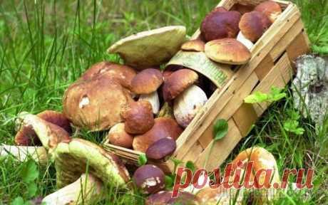 Как вырастить лесные грибы на даче