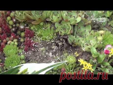 """Как избавиться от муравьев в саду.Сайт """"Садовый мир"""" - YouTube"""
