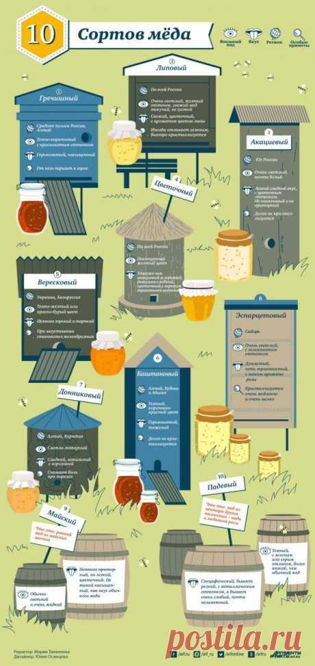 Виды мёда и их особенности. Инфографика   Полезные инструкции от aif.ru