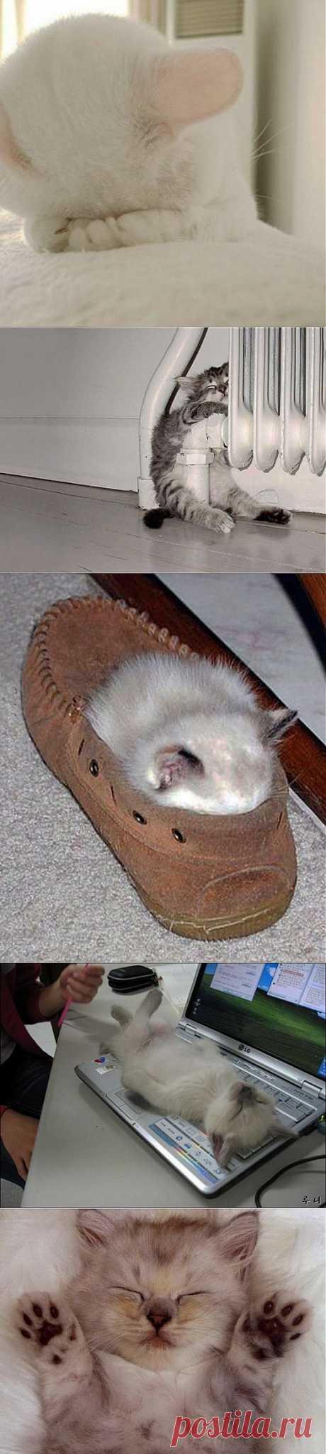 Смешные картинки животных — (Котята)