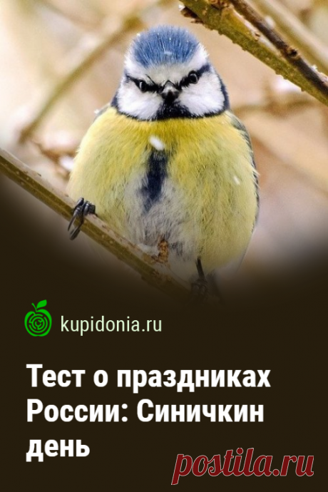 Тест о праздниках России: Синичкин день. Тест по экологичному празднику России. Проверьте свои знания о птицах!