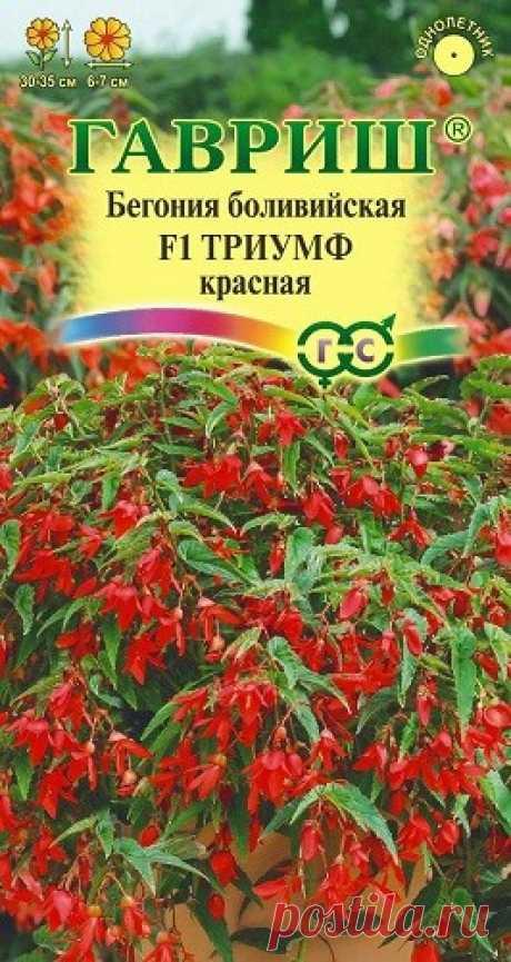 """Бегония боливийская """"F1 Триумф"""", красная"""