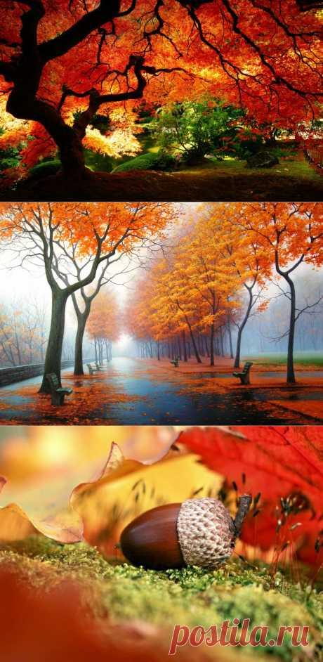 Лучшие фотографии со всего света - 10 осенних фотографий которые стали хитами в блогах
