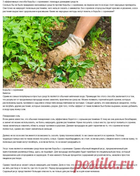 3 эффективных способа борьбы с сорняками с помощью домашних средств
