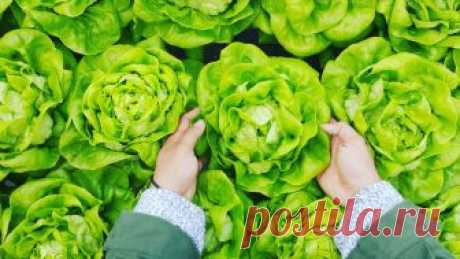 11 продуктов для натурального поддержания коллагена