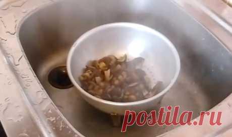 Засолка грибов рядовок на зиму горячим способом: рецепты заготовок на зиму