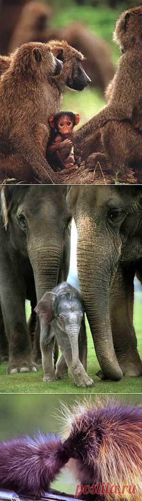 В мире животных! | НАУКА И ЖИЗНЬ