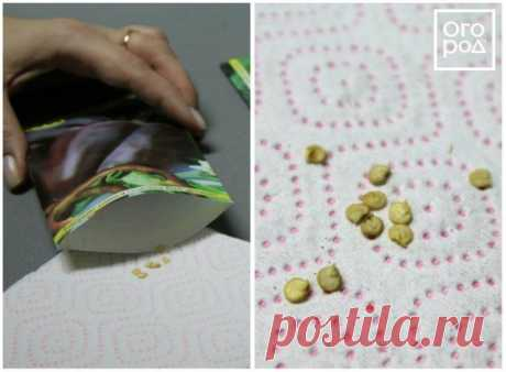 Посев семян перца на рассаду и пикировка: пошаговая инструкция | Рассада (Огород.ru)