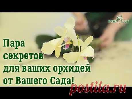 Как ухаживать за орхидеей после покупки в магазине