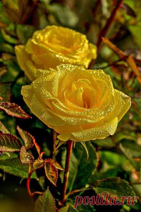 Flower Love Yellow! - https://weheartit.com/entry/313986200