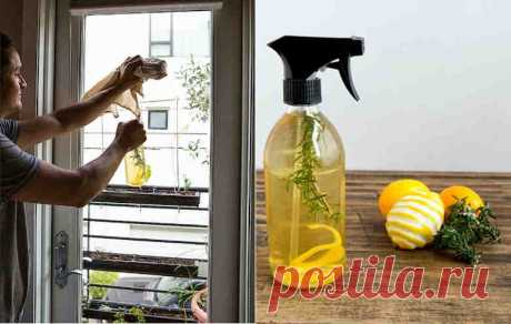 Использование лимонной кожуры — Делимся советами