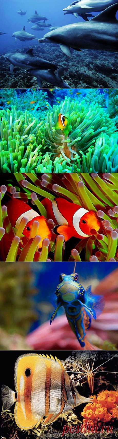 Приглашаю в Подводное Царство..
