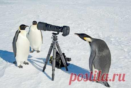 Фотографам дикой природы часто мешают животные