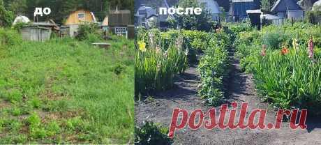 🍀5 способов борьбы с сорняками на заброшенном участке | Дача сибирячки | Яндекс Дзен