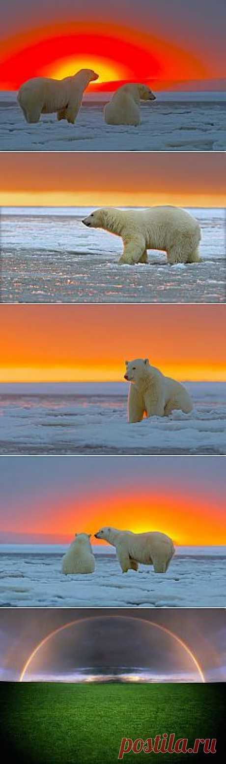 (+1) тема - Снег, закат, белые медведи... | ЛЮБИМЫЕ ФОТО