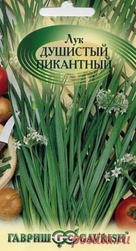 """Семена. Лук Душистый """"Пикантный"""" (вес: 0,5 г) Всхожесть: 88%. Среднеспелый (55-60 дней от всходов до срезки зелени), зимостойкий сорт многолетнего лука. Листья темно-зеленые, плоские, трехгранные, сочные и нежные без остроты, с легким чесночным вкусом, длиной 30-35 см, шириной 0,9-1,1 см. Содержание аскорбиновой кислоты 85-89 мг..."""