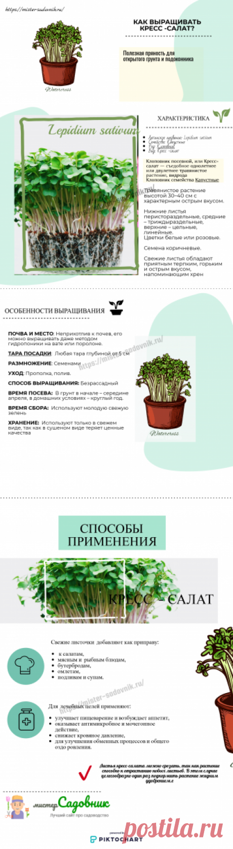 Как выращивать кресс-салат в домашних условиях и на даче