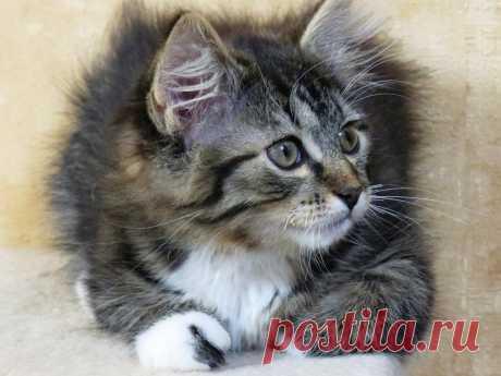Кот, который хотел вернуться   Сушкины истории   Яндекс Дзен