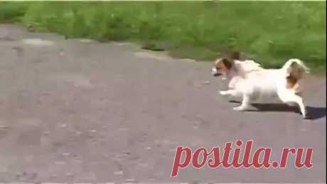 Отважный кот - хозяин своего района ))