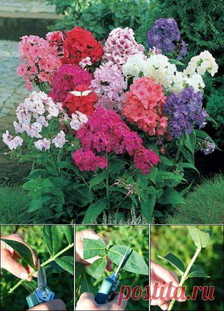 Los floces. Siete modos de la reproducción. Mi jardín, la huerta. La hucha de la experiencia de campo.