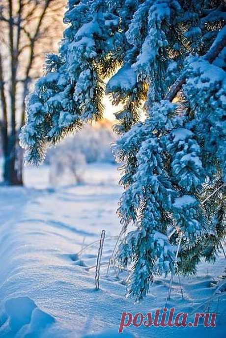 Зимы холодной белые штрихи.Уже ложатся легкую поземкой,на лужах всюду ледяная корка.В блокнот ложатся новые стихи.(волшебная страна книг)
