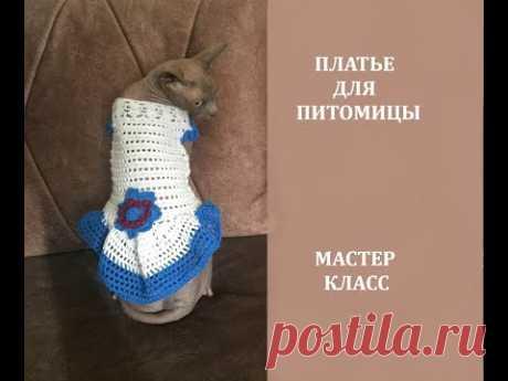 ОБНОВКА ДЛЯ КОШКИ (СОБАЧКИ) ЗА 4 ЧАСА! /МАСТЕР КЛАСС