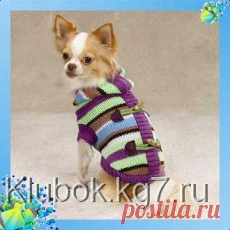 Knitted sweater for a dog