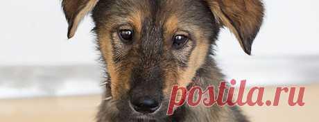 Как помочь животным из приюта — советы в Журнале Маркета