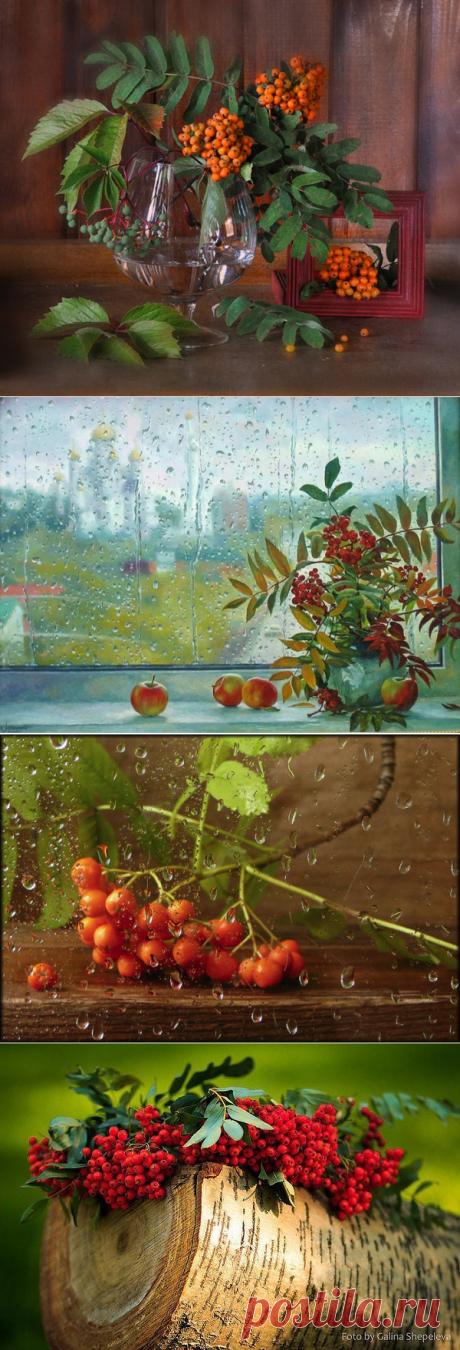 Скоро осень, за окнами август