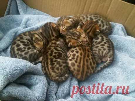 Спят усталые котята