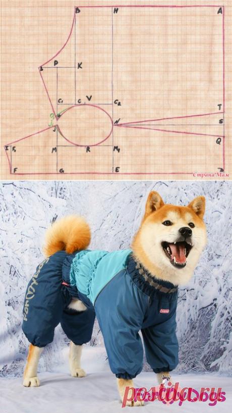 La construcción del patrón individual para el perro (la variante № 1) - el Ropero para nuestros pupilos queridos (los perros, las gatas) - el País de las Mamás