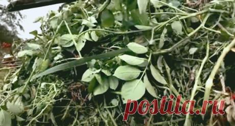Перестала сжигать ботву после сбора урожая. Пусть приносит пользу в саду | Пенсионерка из глубинки | Яндекс Дзен