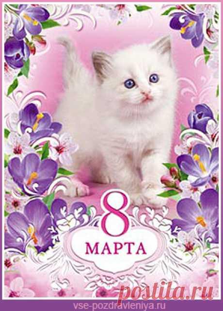 Картинки по запросу с 8 марта котик