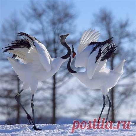 Танец любви..