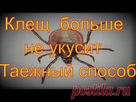 La Garrapata entsefalitnyy no morderá el Modo Comprobado de los habitantes de la taiga de las tenazas de la Práctico ha mostrado por ejemplo la higiene de los pies en el bosque debe ser en el primer lugar. Cada uno...