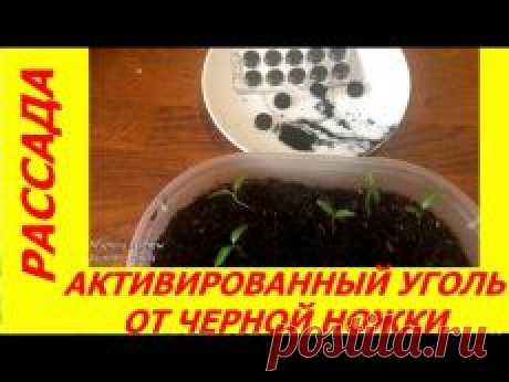 Письмо «❀ Весенний интерьер. Декольте без морщин. Запреты в полнолуние. Яблочные облака. Женская точка. Чёрная ножка // Кусочек Постилы к чаю!» — Постила — Яндекс.Почта