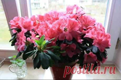 С этим средством зацветут даже самые капризные комнатные растения