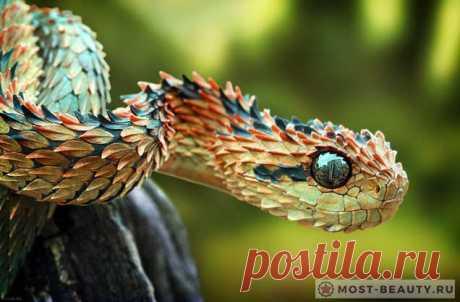 Самые красивые змеи в мире ( + много Фото змей)