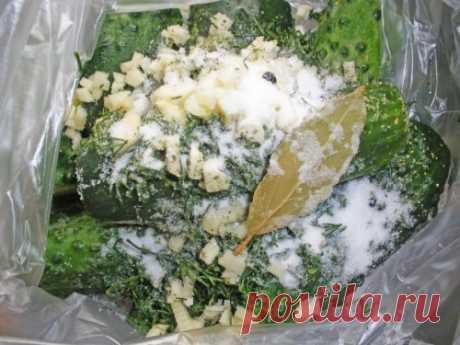 Малосольные огурцы в пакете - рецепт быстрого приготовления с фото / Простые рецепты