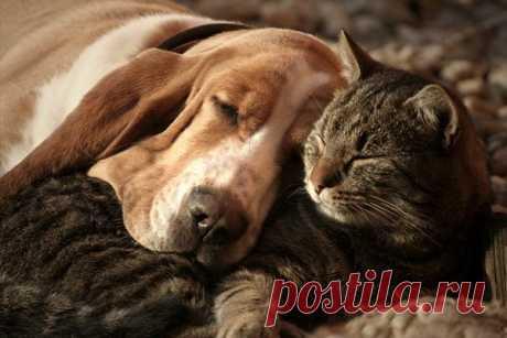 Ученые выяснили, что кошки умнее собак Специалисты провели новое исследование и сравнили мозг домашних питомцев. Результаты подтвердили, что кошкиумнее собак.Немецкие ученые из Института исследований мозга провели новый анализ, в ходе которого изучили кору головного мозга домашних животных. Результаты показали, что у...