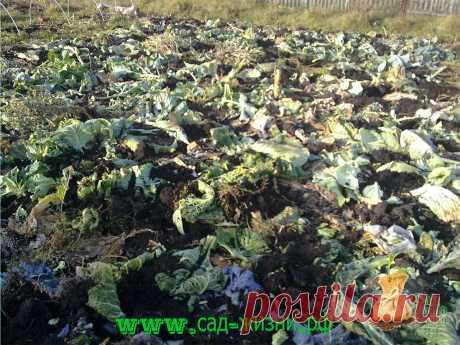 Вот как я удобряю почву в огороде. Благодаря этому получаю урожай овощей больше, чем планировал | Сад Жизни | Яндекс Дзен