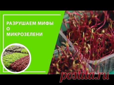 Разрушаем мифы о микрозелени
