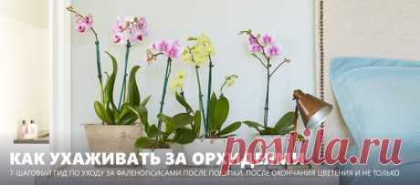 Уход за орхидеями после покупки и после цветения - 7 шагов для новичков с фото Рассказываем, как ухаживать за орхидеями Фаленопсис после покупки и после цветения, а также как и когда лучше пересадить цветок. Бонусы: фото орхидей в интерьере и таблица проблем и решений.