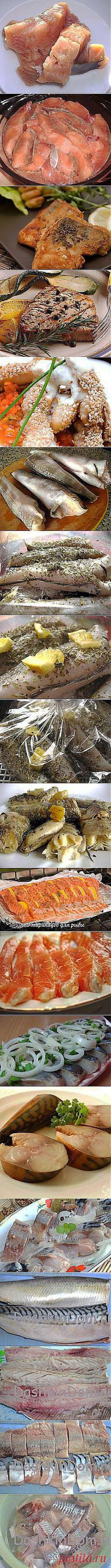 свутлана шефер: Рыба | Постила