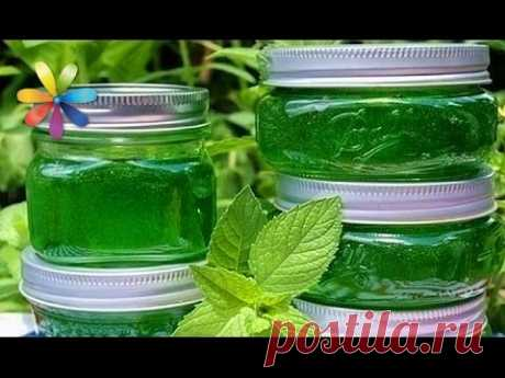 The recipe of jam from mint! 3 secrets from Zhenya Klopotenko – awaking All to dobra. Release 827 of 15.06.16 - YouTube