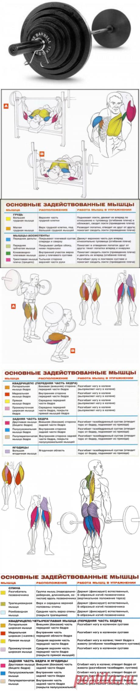 Базовые упражнения для набора массы | Sport My Way | Sport - My Way