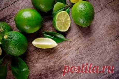 Комнатный лайм: уход за лаймом, растущем в контейнере - Выращивание цитрусов. Лимоны, апельсины и другие комнатные цитрусовые растения, фото плодов, картинки видов
