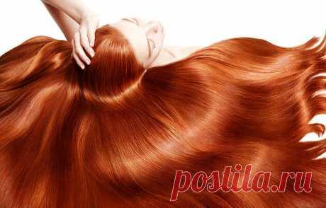 Как остановить выпадение волос: щитовидка или гипофиз?   Едим правильно   Яндекс Дзен